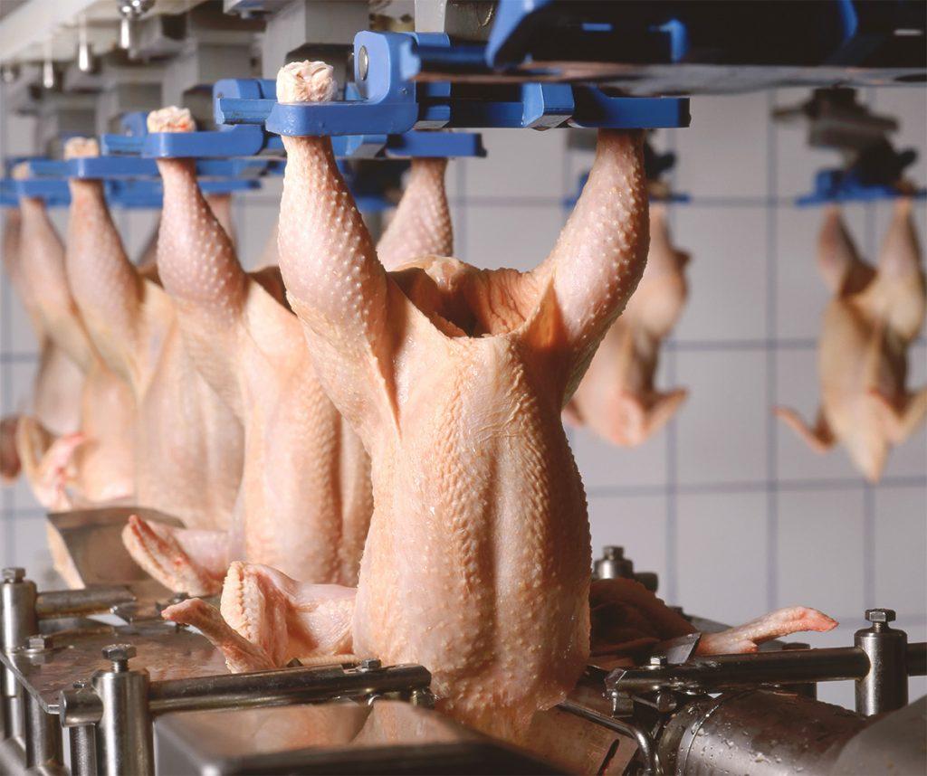 poultry-processing-centre
